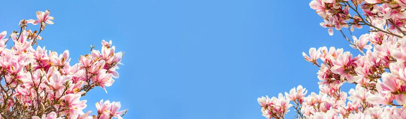 Magnolie vor blauem Himmel im Frühling Wall mural