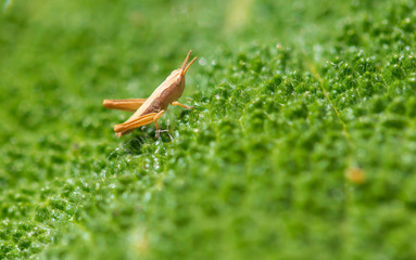Grasshopper in nature in spring