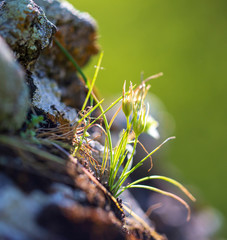 Grass grows in mountain fat