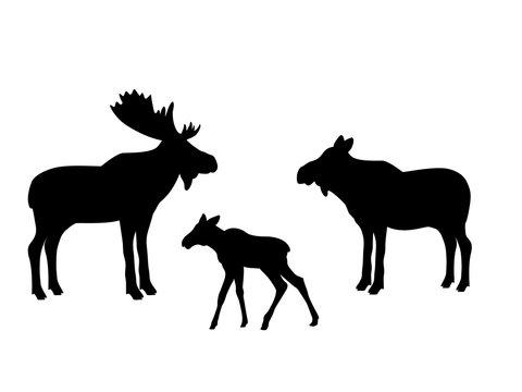 Elk moose mammal black silhouette animal. Vector Illustrator.