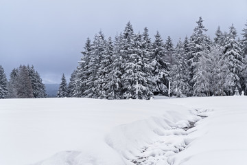 Beautiful winter landscape in Harz mountains national park