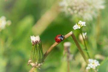Nature background ladybug.