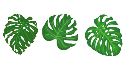 Web. tropical leaves. Hand drawn leaves illustration vector.