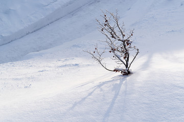 Tree branches in the snow on sunny day