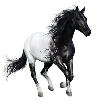 Black and white horse. Watercolor drawing