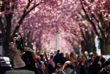 A student from China takes a picture of the so-called Cherry Blossom Avenue in Bonn