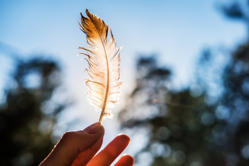 hand holds in his fingers a feather lit by the sun against the blue sky