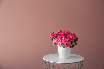 Pot with beautiful blooming azalea on table against color wall