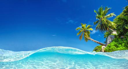 344e64994b9 Palm Beach In Tropical Paradise