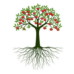 Green Spring Tree with Roots and fruits. Vector Illustration.