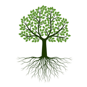 Green Spring Tree with Roots. Vector Illustration.