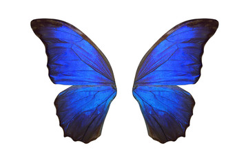 tropical butterfly wings isolated on white background. Wall mural