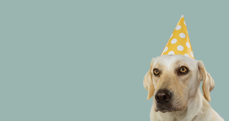 DOG CELEBRATING A BIRTHDAY PARTY, WEARING A YELLOW POLKA DOT HAT. ISOLATED AGAINST PASTEL BLUE BACKGROUND.