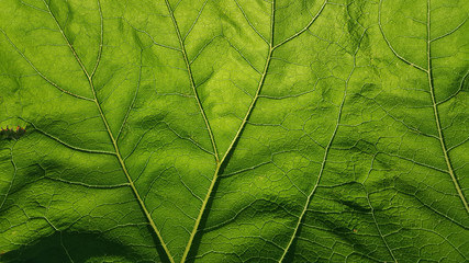 close up of green leaf to show texture and lines