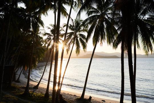 Remote beach sunset view through palm trees.