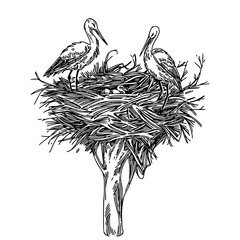 Two storks in nest with chicks. Sketch. Engraving style. Vector illustration.