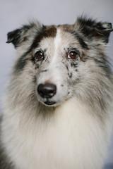 Dapper Dog