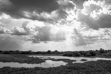 Black and White Sunset with Clouds and Lake in Pantanal, Brazil
