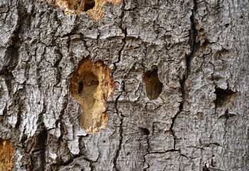 Surface texture of a dead tree