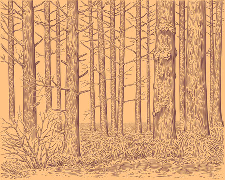 Tree trunks in the forest. Hand drawn engraving. Editable vector vintage illustration. 8 EPS