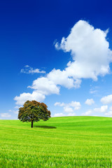 Wall Mural - Idyllic view, lonely tree on green field