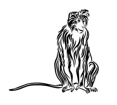 Hand drawn monkey outline sketch. Vector black ink drawing isolated on white background. Graphic animal illustration