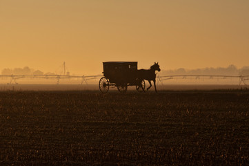 Amish Horse and Buggy in Sihouette with Irrigation at Dusk