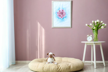 Cozy place for rest near color wall in room