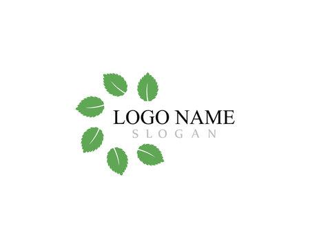 Mint leaf vector icon illustration design