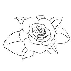 succulents line vector illustration