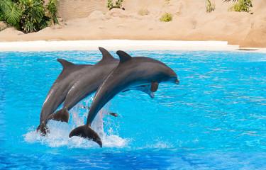 Photo sur Aluminium Dauphins Jumping dolphins at animal park.