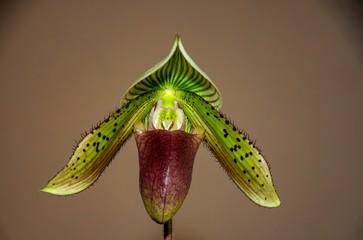 Garten Gärtnern Aussaat Orchideen Gartenbau