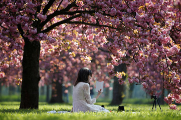 A woman poses for a selfie picture in front of pink cherry tree blossoms during a sunny spring morning at the Parc de Sceaux gardens near Paris