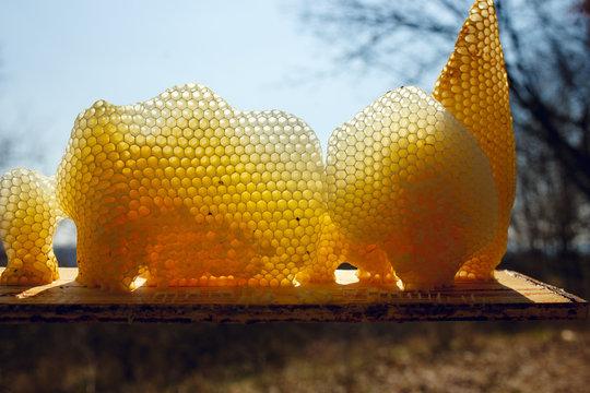 Fragment a golden honeycomb in sunlight. Horizontal outside shot.