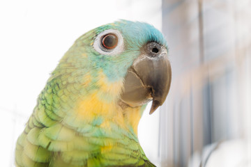 selective focus of adorable bright multicolored amazon parrot head