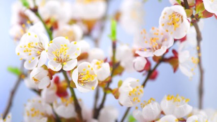 Canvas Print
