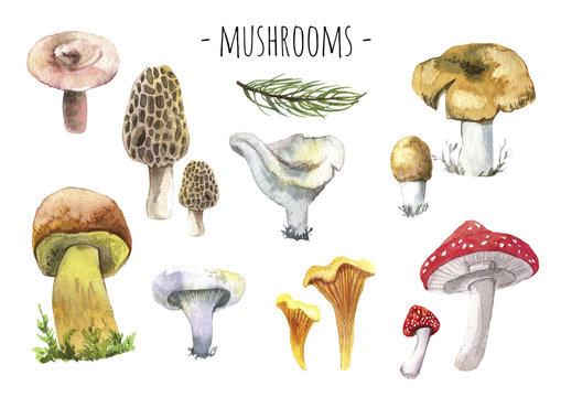 Forest mashrooms watercolor set. different forest mashrooms.