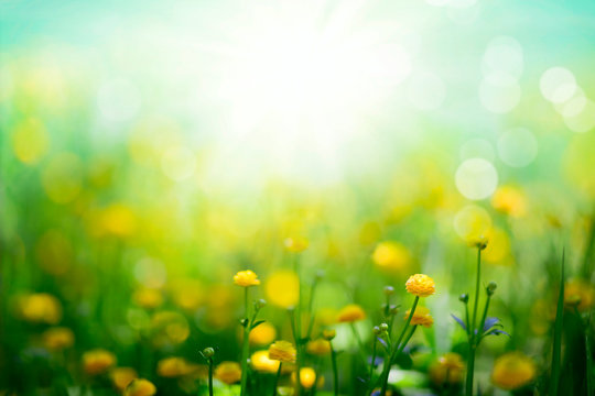 Yellow spring flowers on sunny green meadow background