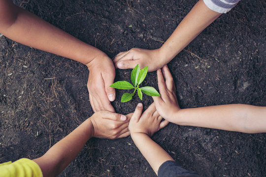 Girl hands holding young plant.