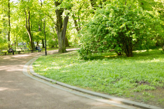 paths in the Park. spring square