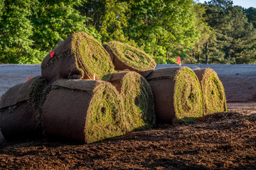 Fresh sod grass squares stacked on pallet ready for commercial