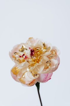 Close-up flower in studio