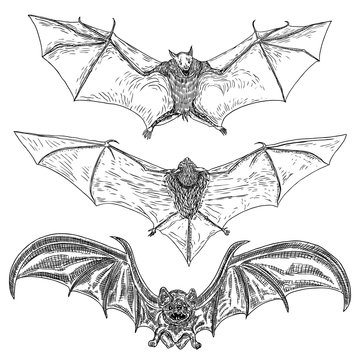 Set of bats with open wings drawing. Gothic illustration of monsters for the Halloween. Witchcraft magic, occult attributes decorative elements. Drawing of night creatures with fangs. Flying bats