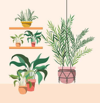 houseplants in macrame hanger and shelfs