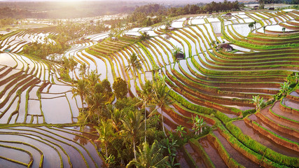 Aerial view of Bali Rice Terraces. The beautiful and dramatic rice fields of Jatiluwih in southeast Bali have been designated the prestigious UNESCO world heritage site.