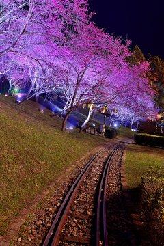 Railway in cherry blossom trees,Taiwan