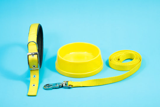 Pet Collar, bowl and leashes on blue background.  Pet accessories concept