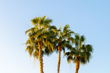 Palm trees in Larnaca with late sunset glow on blue sky