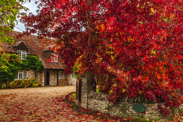 Rural cottage terrace with autumnal trees Wall mural