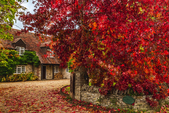 Rural cottage terrace with autumnal trees
